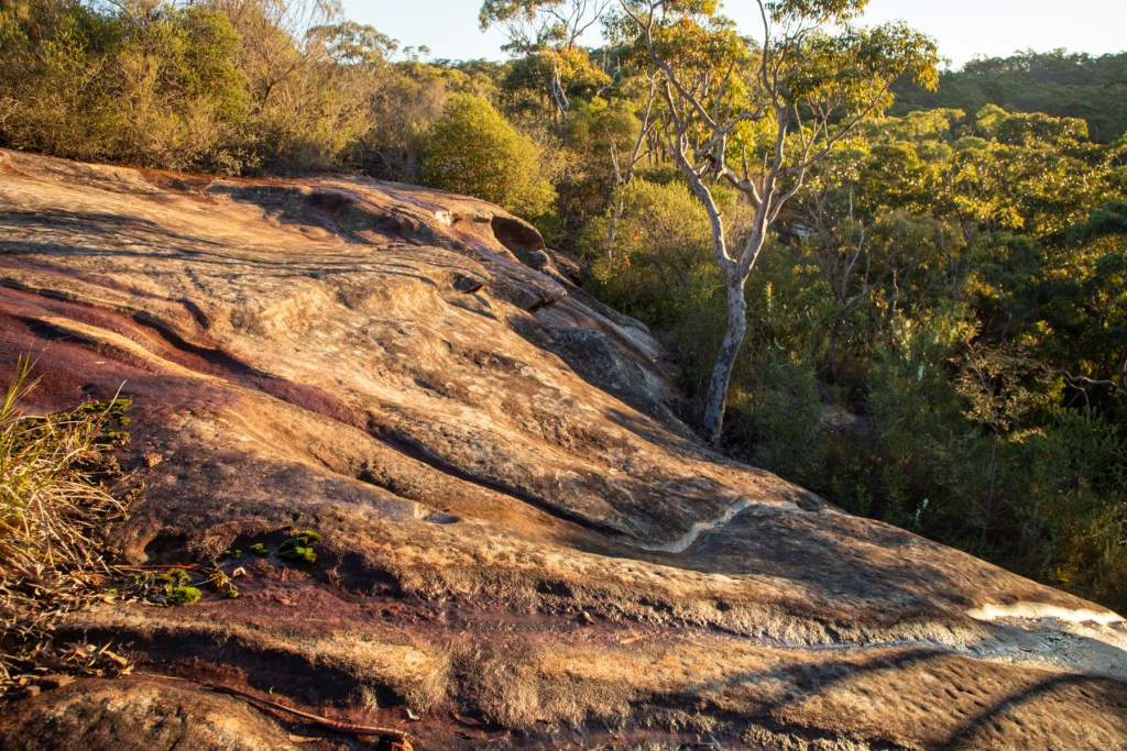 IMG 5015 LR Long Trail East (Roach Trig)