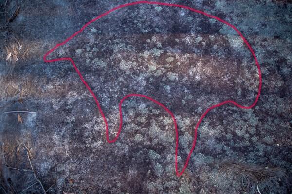 Wombat at Bobbin Head Track (lower site)