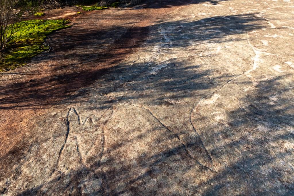 IMG 5798 LR Bluff Track Whale