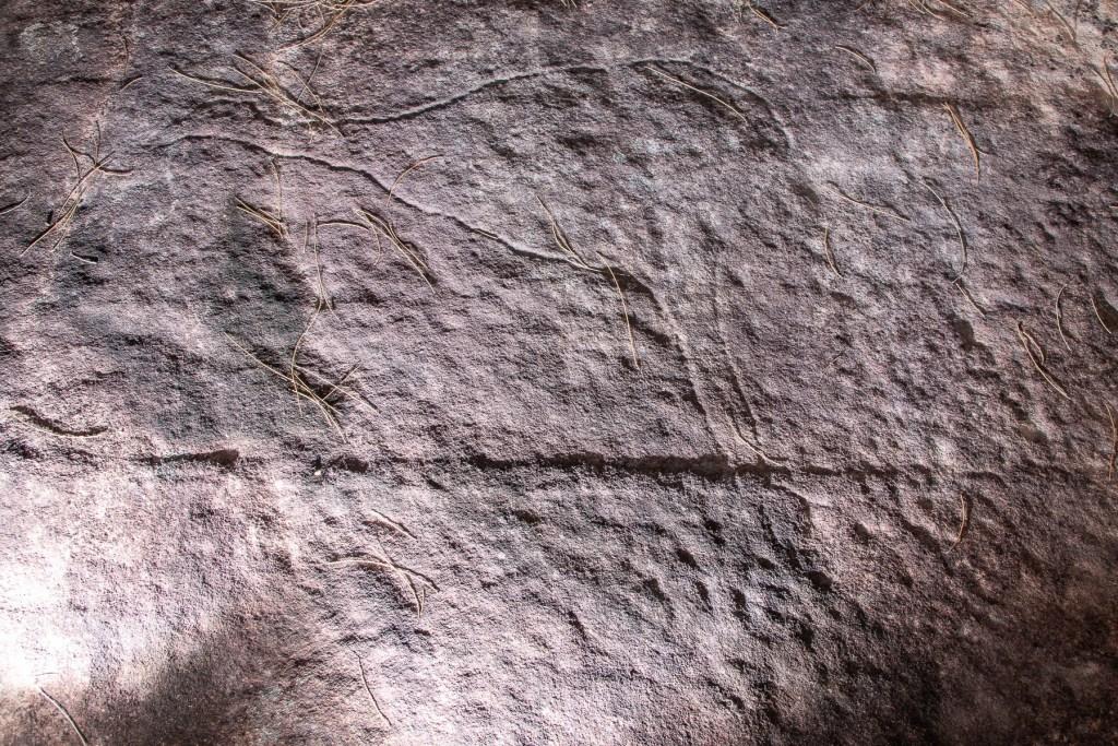 AWAT5075 LR Topham Trail Emu engraving