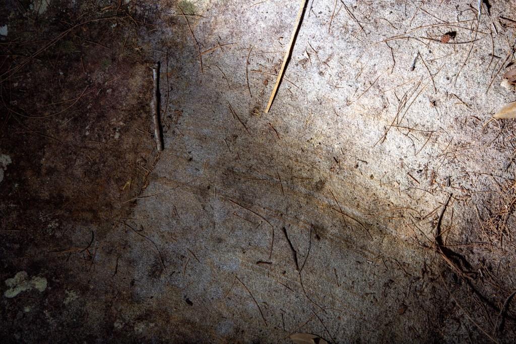 AWAT9622 LR Upper Smiths Creek frieze and mundoes