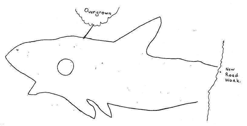 Engraving BasinTrackShark Basin Track Shark