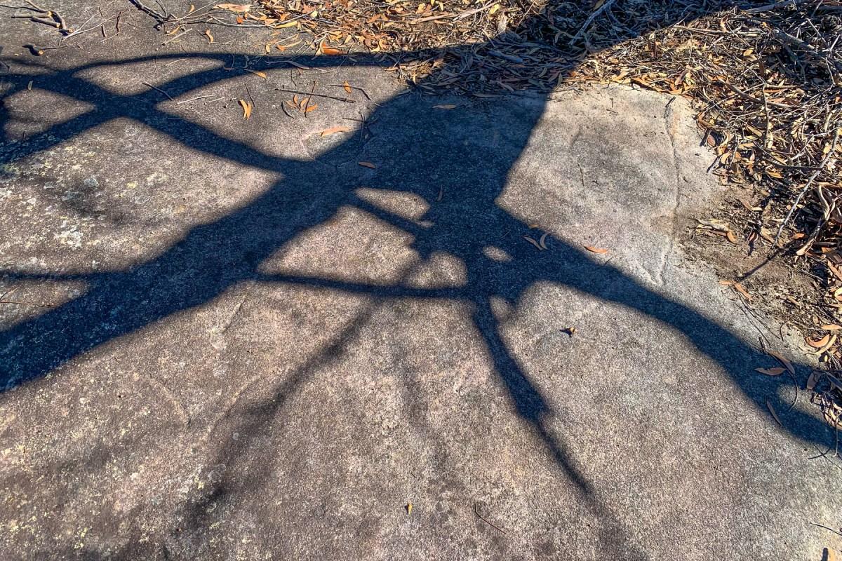 IMG 0579 LR Smiths Creek Ridge Emus