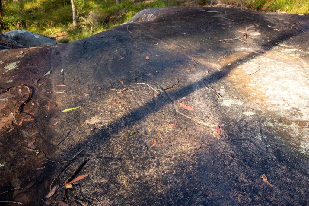 "IMG 4054 LR Terrey Hills - ""Lyrebird Site"""