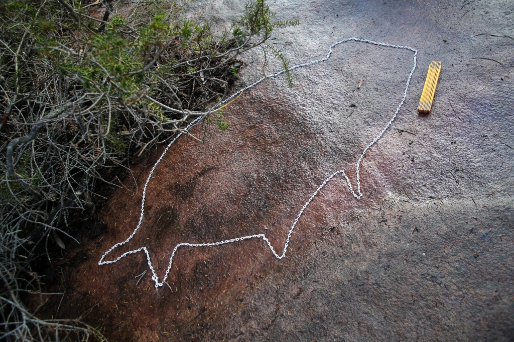 AWAT6986 LR Basin Koala Engraving