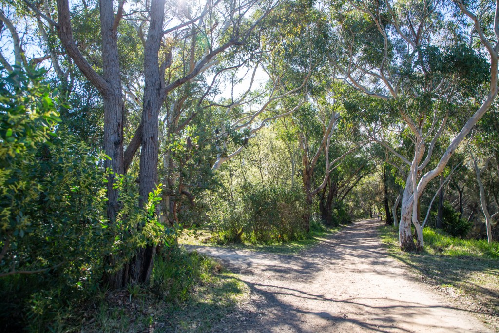 AWAT0084 LR Exploring the south of Red Hill Reserve