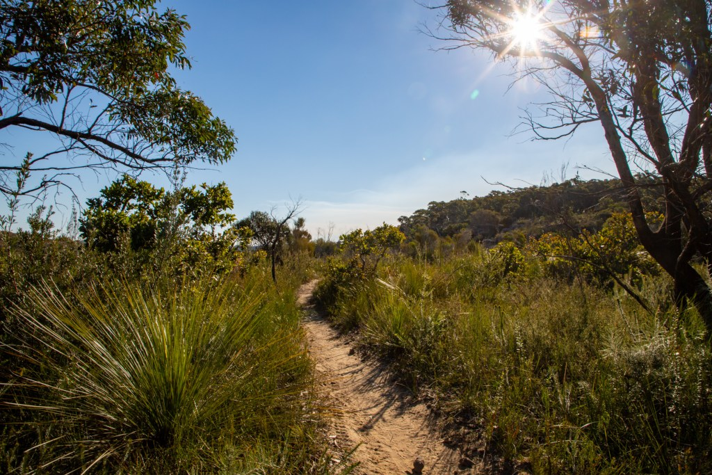 AWAT0145 LR Exploring the south of Red Hill Reserve