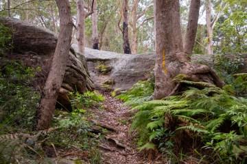 AWAT2786 LR Twin Creeks Reserve - a short but interesting loop walk