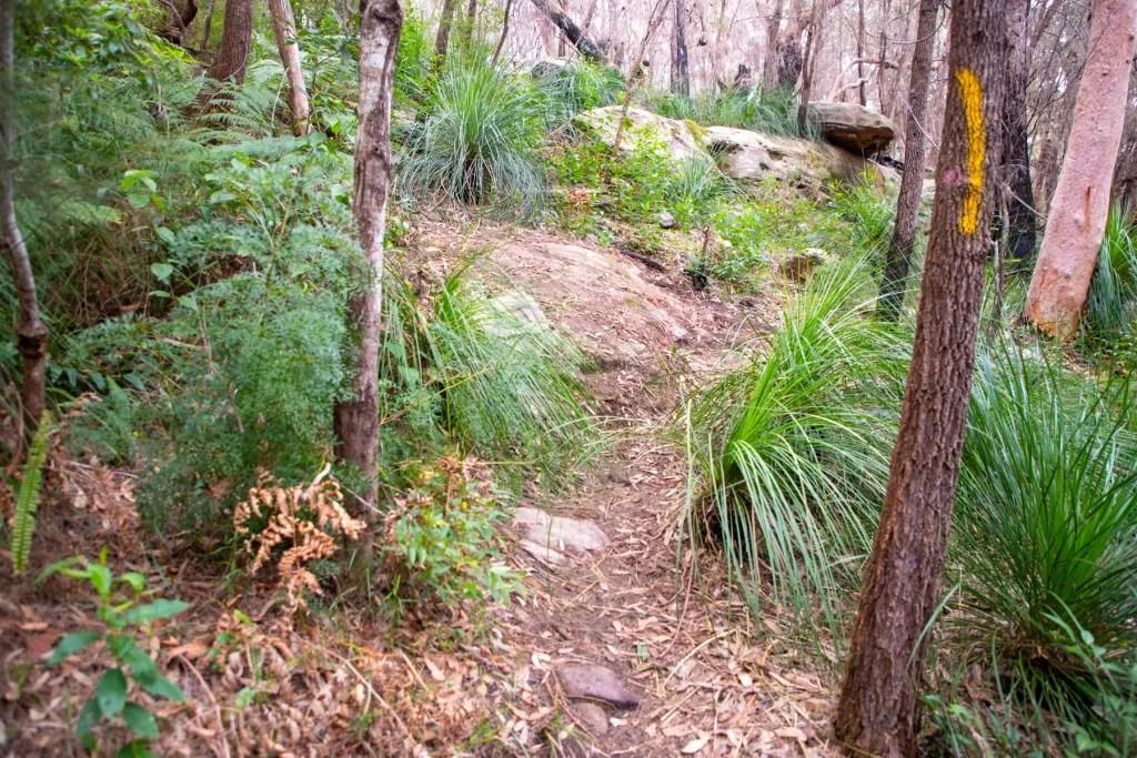 AWAT2798 LR Twin Creeks Reserve - a short but interesting loop walk