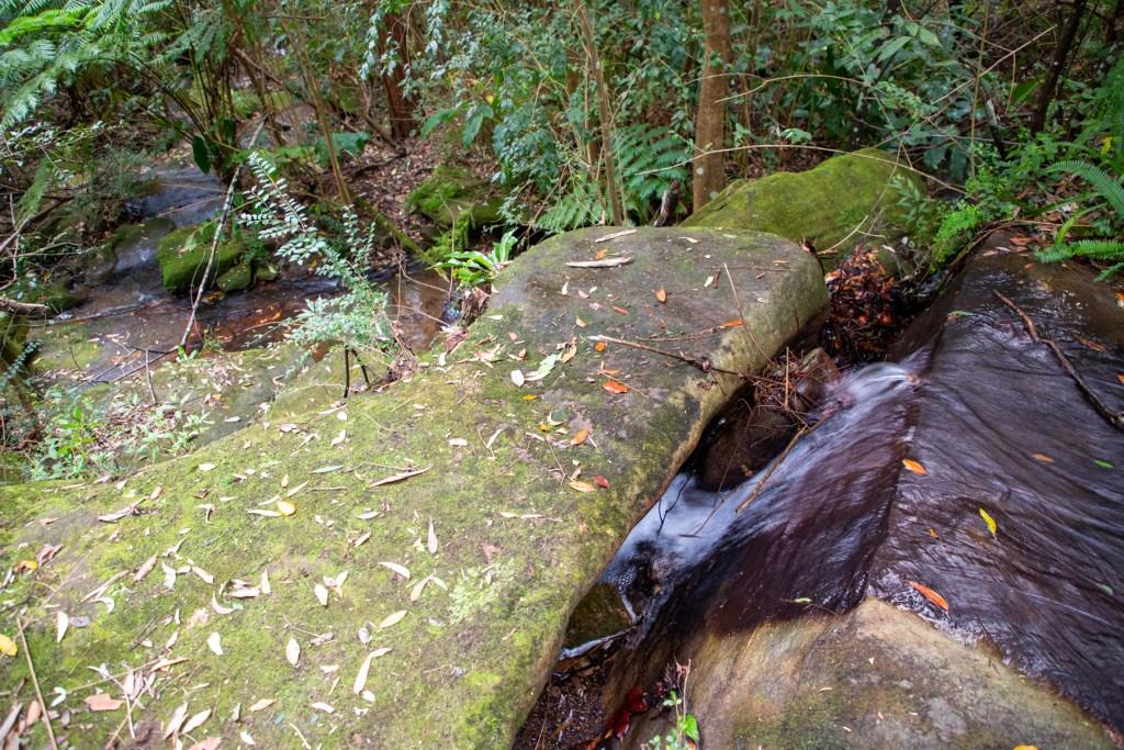 AWAT2827 LR Twin Creeks Reserve - a short but interesting loop walk