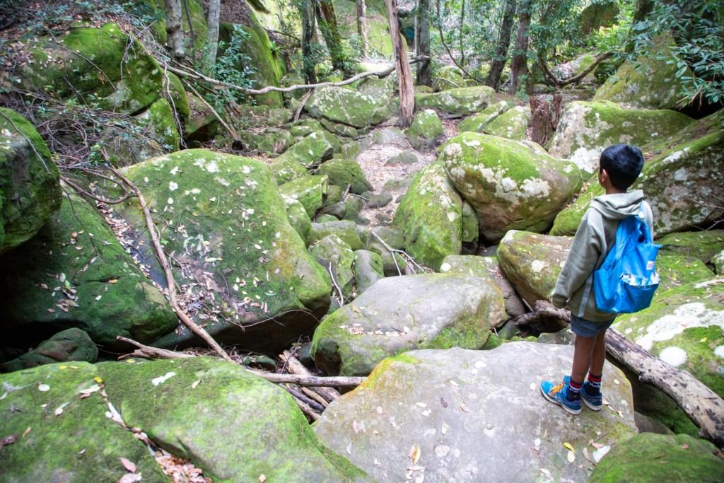 AWAT3237 LR Exploring Mullet Creek in Irrawong Reserve