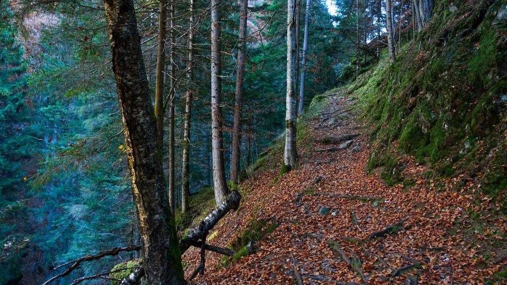 DSC02536 LR Descending into Les Gorges Mystérieuses de la Tête-Noire