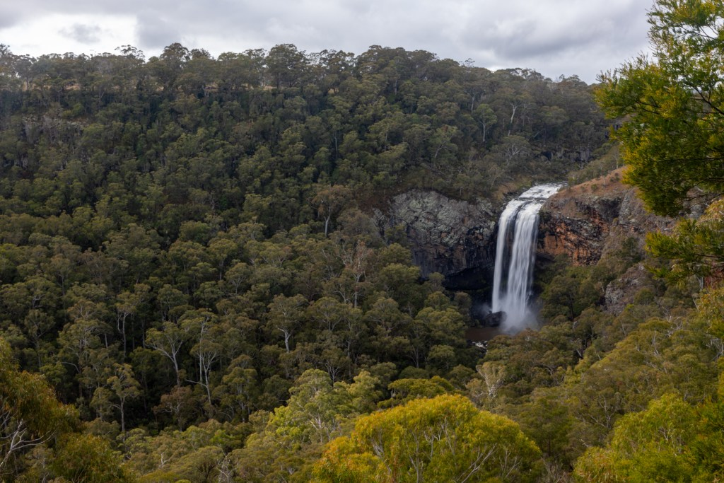 Ebor Falls (Waterfall Way)