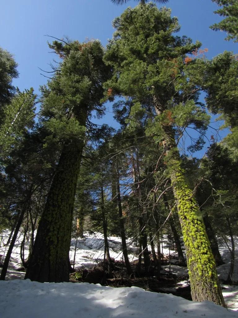 IMG 0003 Inspiration Point (Yosemite)