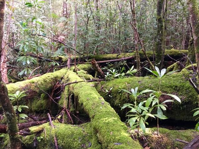 Mossy Log 2