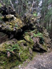 Always surprising how life just finds away - in this case the root system of a fallen tree becomes an entire new structure for other plants