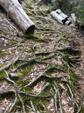 """""""Moss, Roots and Logs"""" is the name I've enigmatically given to this picture of moss, roots and logs."""