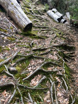 """Moss, Roots and Logs"" is the name I've enigmatically given to this picture of moss, roots and logs."