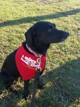 """Xena with her """"I raced for the rescues"""" bandana"""