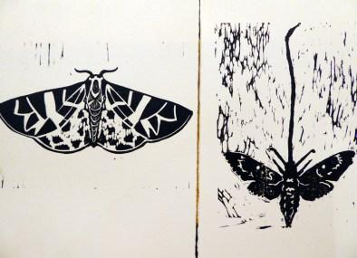 3_moth_migration_printsocial_lorenz
