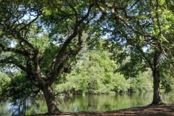 #audubonpark