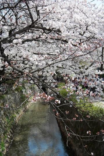 #blossomsgalore