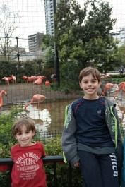 #flamingosaresmelly
