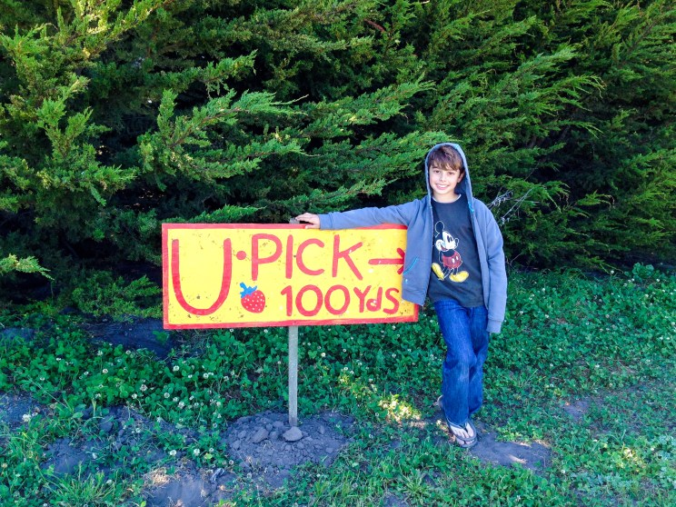 #upickpatch