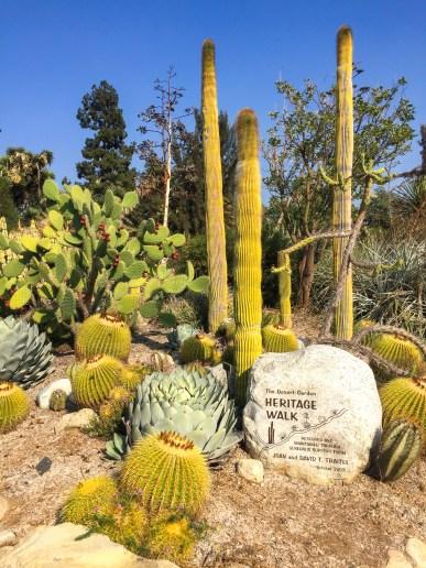 #cactusgarden