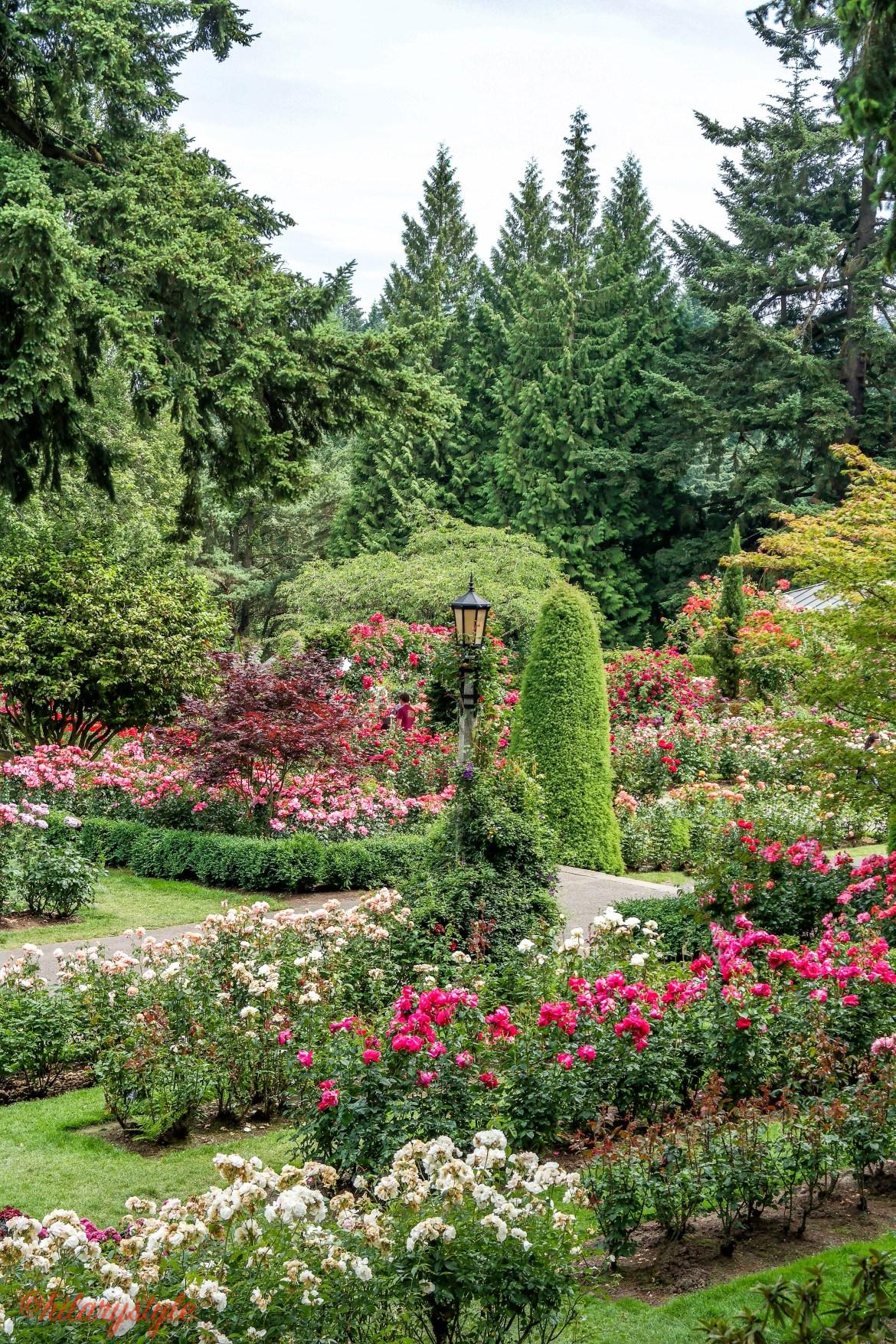 Portland Rose Garden-