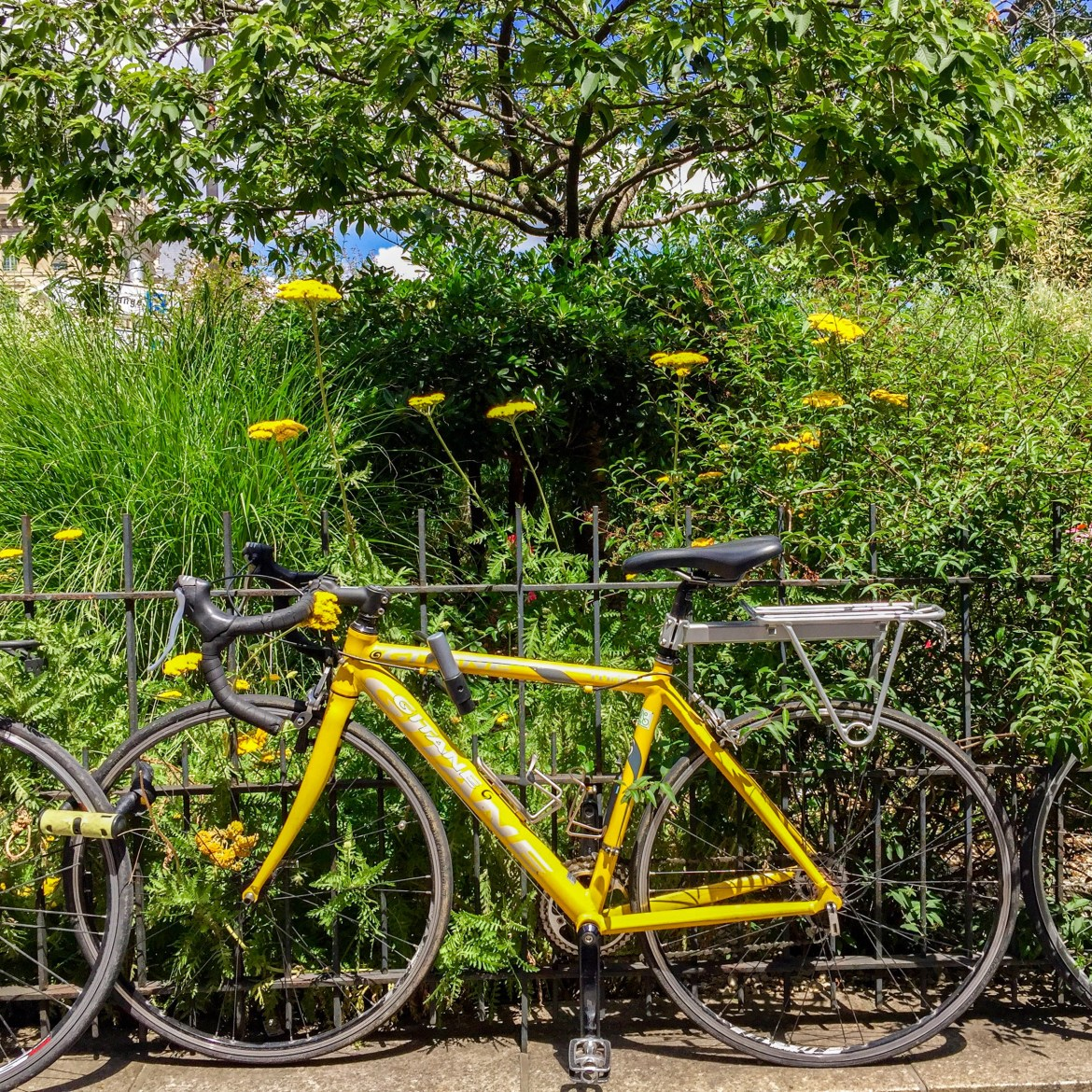 yellow-bicycle-7125