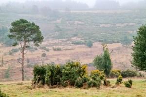 Ashdown Forest Suffolk England United Kingdom
