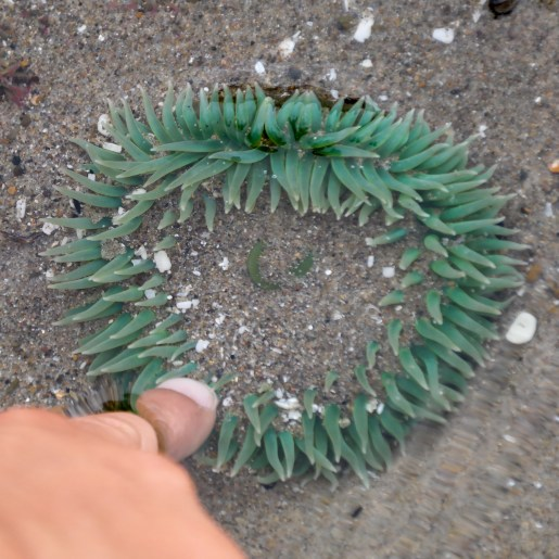 Heceta Head Florence Oregon