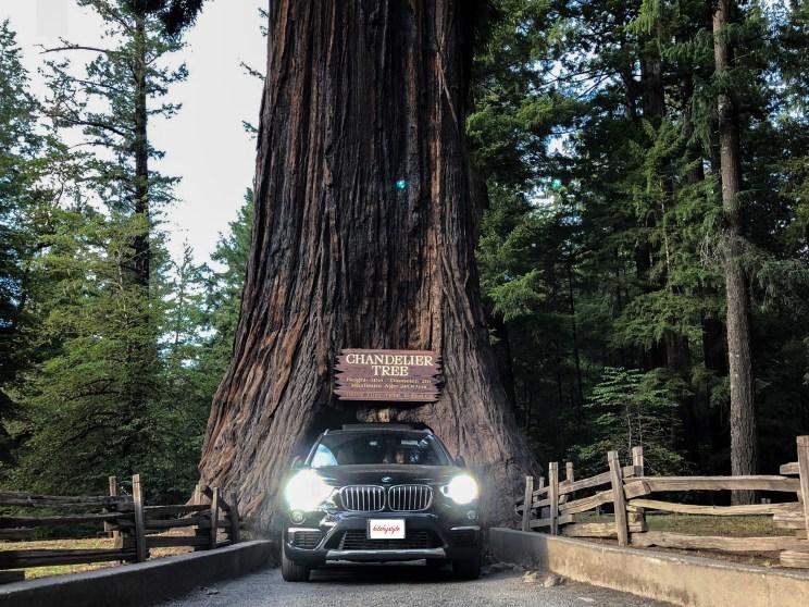 Drive-Thru Tree Leggett California