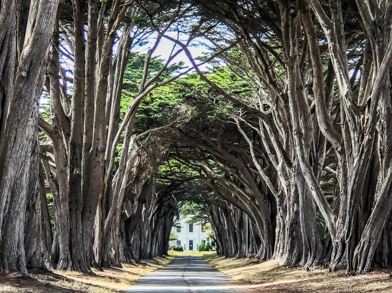 Cypress Tree Tunnel Point Reyes California
