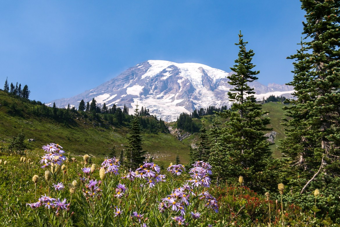 Alpine Meadow Paradise Mount Rainier