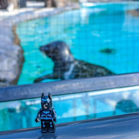 Batman goes to the Tokyo Zoo