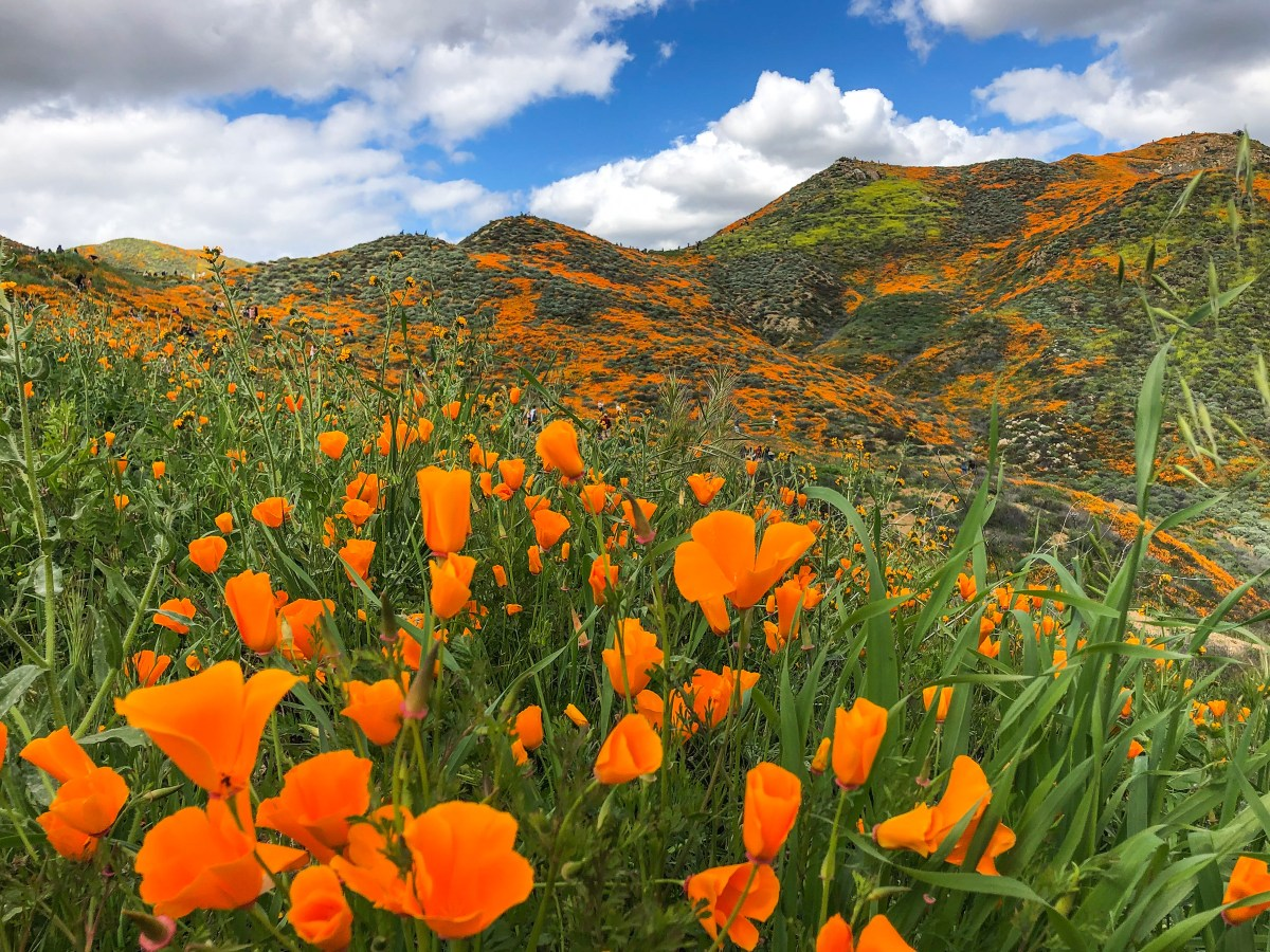 Viewing California's Super Bloom 2019