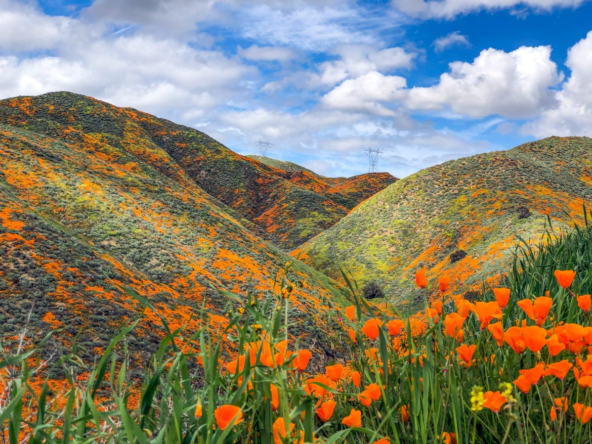 #walkercanyon #superbloom2019 #californiapoppies