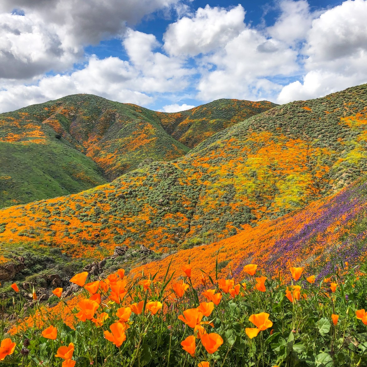 #superbloom2019 #californiapoppies