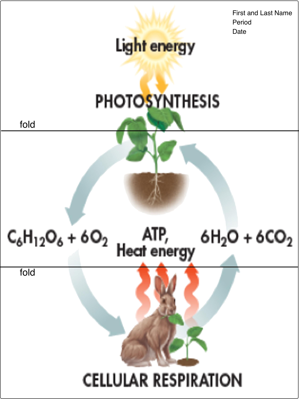 Figure 9 3 Cellular Respiration Amp Photosynthesis