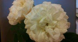 wpid-2011-07-11-08.39.08.jpg