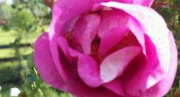wpid-2012-06-25-17.59.07.jpg