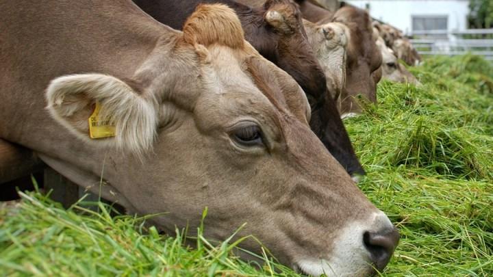 Nachfrage nach Milchprodukten zieht an