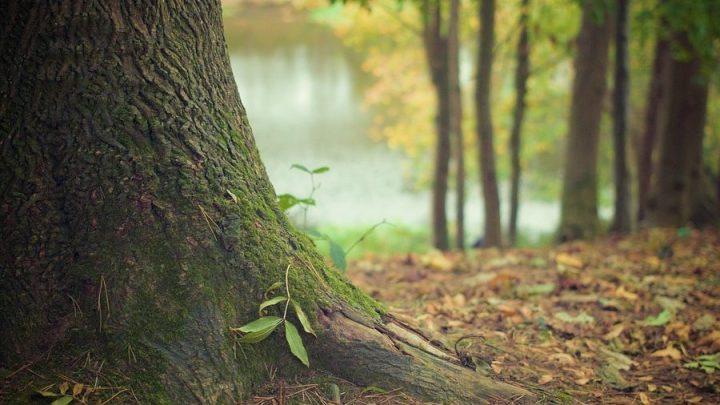 3,8 Millionen Euro Förderung für den Wald
