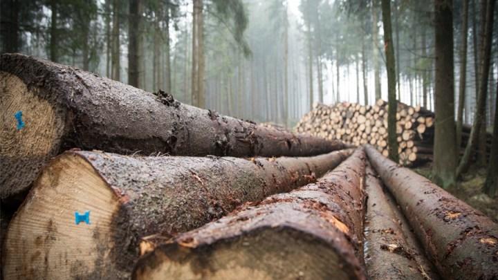 Niedersachsens Bäume vorwiegend in privater Hand