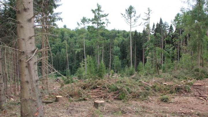 Der Wald wird zum Dauerpatienten