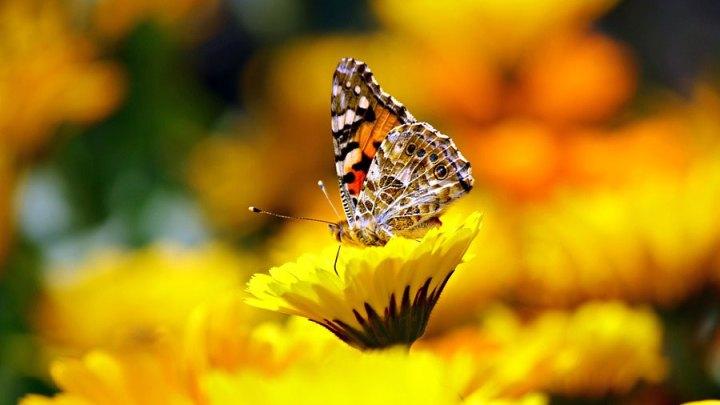 """""""Ohne ein Pestizidverbot ist das Insektensterben nicht zu aufzuhalten"""""""