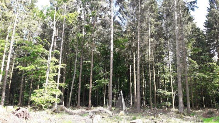Klimawandel schädigt Bäume, die zur CO2-Speicherung und Klimarettung nötig sind