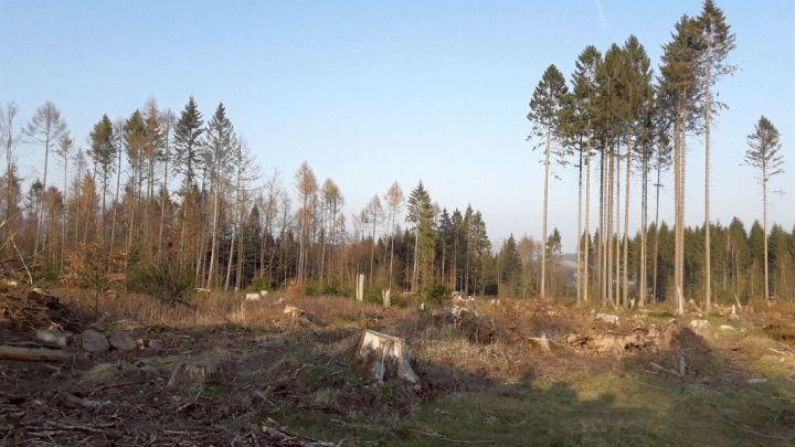 Corona stellt die Waldbesitzer vor große Probleme